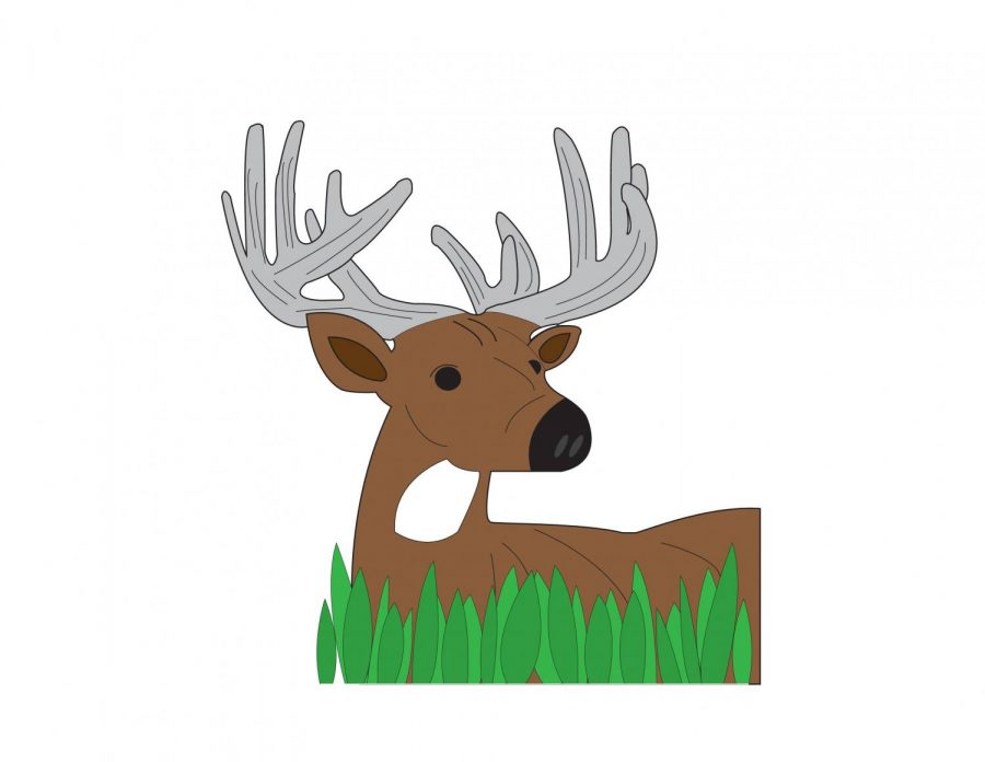 Whitetail Hunting Preview