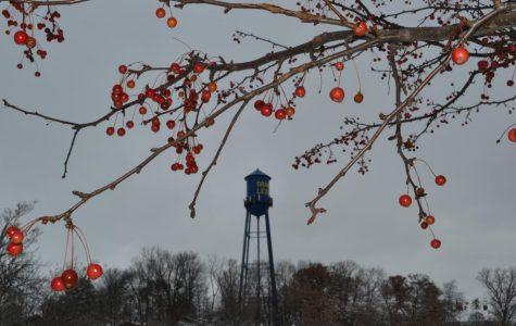 Midwestern Winter Wonderland